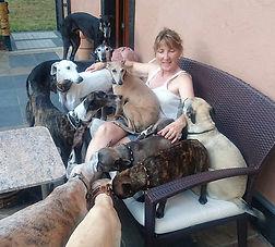 Windhundhalsbänder, Windhundhalsband, Galgo, Whippet, Greyhound