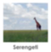 Serengeti, Safari in Tanzania