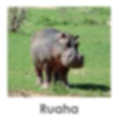 Ruaha, Safari, Tanzania