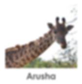 Arusha National Park, Safari tanzania