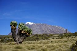 Climb Mount Kilimanjaro?
