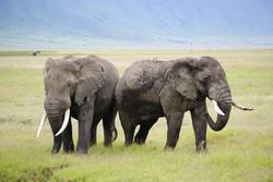 wildlife in tanzania