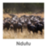 Ndutu, Tanzania Safari, Migration