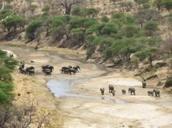 Wildlife In Africa