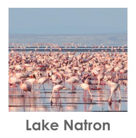 Lake Natron, Flamingos, Safari, Tanzania