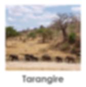 Tarangire Safari Tanzania