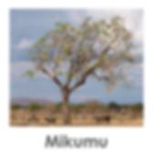 Mikumi, Safari, Tanzania