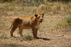 Go Safari to See Wildlife?