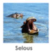 Selous, boat safari, walking safari, Tanzania