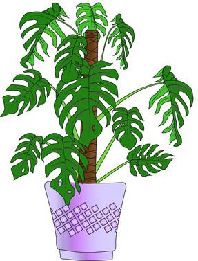 Anne_Monstie Plant.jpg