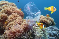 contaminacion-mar-y-oceano