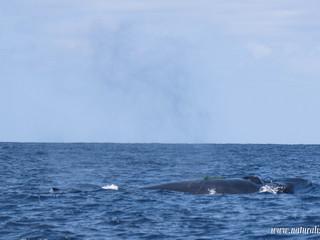 |03062021am| Impact of fishing gear on wildlife