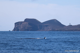 whalewatchingtour05062021-4.JPG