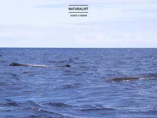 |17072020| Windy expedition full of sperm whales