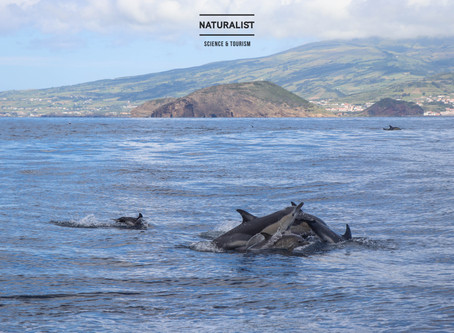 |06072020| Sperm whales and a sea of common dolphins