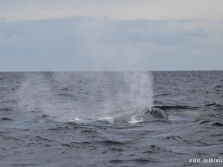 |21052021| Special day with two endangered baleen whales