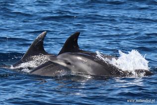 whalewatchingtour23052021-15.JPG