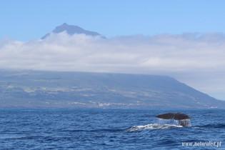 Whalewatchingtour18062021-2.JPG
