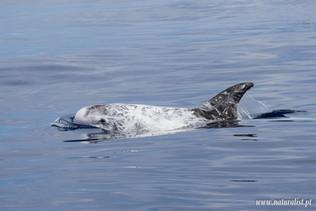 whalewatchingtour12062021-4.JPG