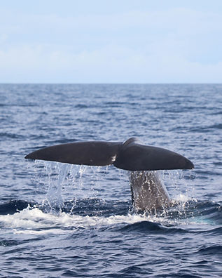 whale watching azores 20200827-2.JPG
