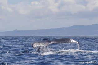 whalewatchingtour30052021-8.JPG