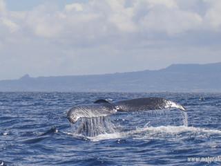 |30052021| Humpback whale visit