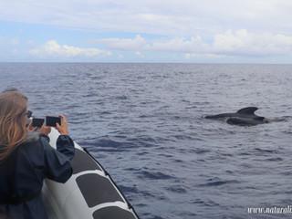 |27062021| Pilot whales are back | As baleias piloto estão de volta