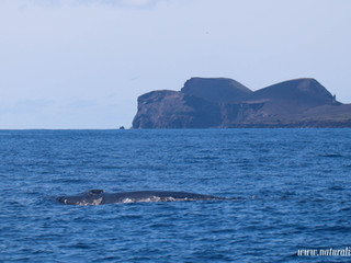 |05062021pm| Whales and dolphins with a Vulcano in the background