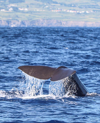 whale watching azores 20200822-5.JPG