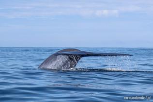 whalewatchingtour04052021-7.JPG