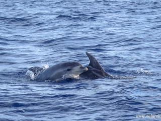 |10102020| The comeback of the false killer whales