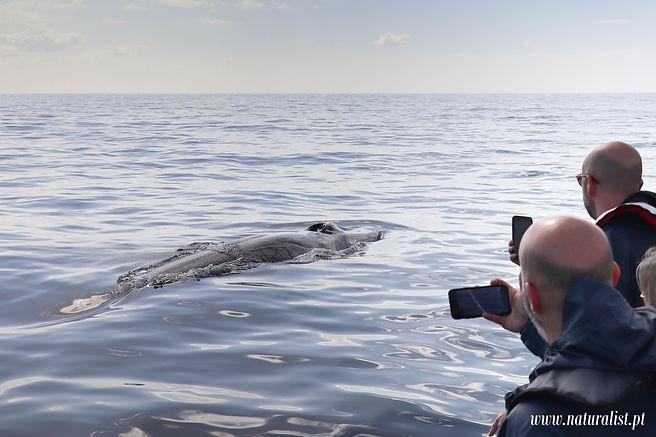 whalewatchingnaturalistpt26032021-3.JPG