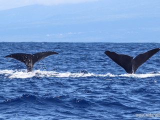  20210815pm  Synchronized diving in perfection   Mergulho sincronizado