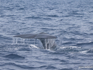 |03082020| Baby sperm whale