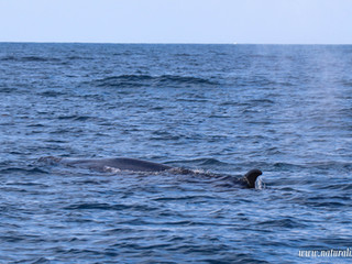  29042021  The whales are back!