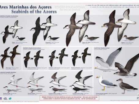 Seabirds of the Azores | Aves Marinhas dos Açores