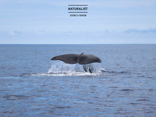 |04072020pm| Powerful sperm whales