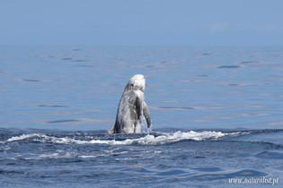 whalewatchingtour12062021-2.JPG