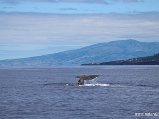  21072020  Biggest toothed whale