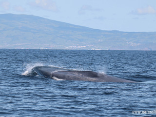 |23052021| Little blue whale calf surprise