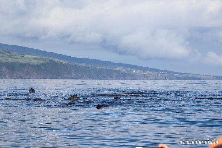 whalewatchingtour12062021-5.JPG