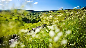 Gaunless valley walk.jpg