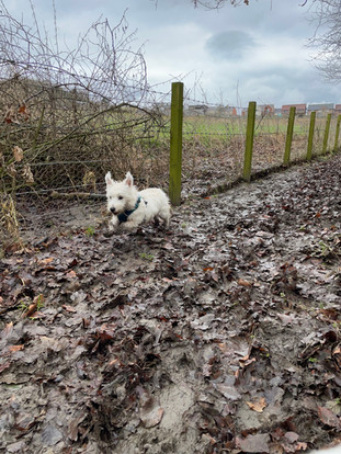 Our pack baby making the most of the mud!