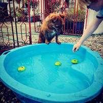 Apple bobbing with Bobby on a hot day!