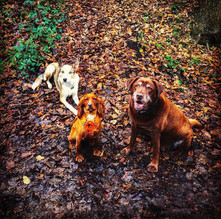 King, Queen & Prince of the pack...