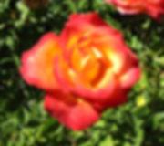 Website Green Bough Pic 4_edited.jpg