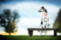 Jules Leinenwelt, Leinenwelt,Hundehalstuch, Hundeleine, Hund, Dog, Instagra, Bandana,