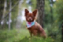 Hundewelt, Leinenwet, Jules Leinenwelt, Hundeleine, Hundehalsband