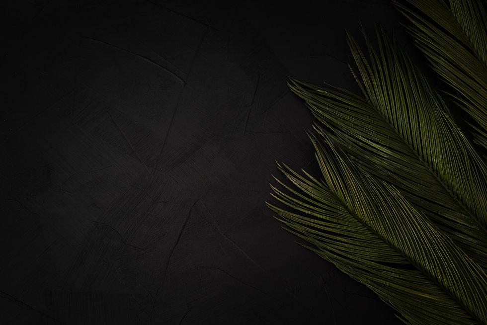 beautiful-palms-black-with-copyspace.jpg