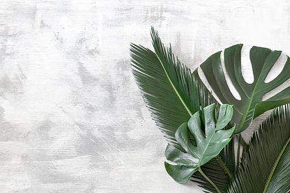 beautiful-tropical-leaves-white-backgrou